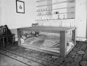 A couple sleeping in a Morrison shelter during the Second World War