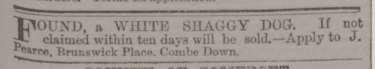 Shaggy dog, Brunswick Place, Combe Down - Bath Chronicle and Weekly Gazette - Thursday 11 September 1873